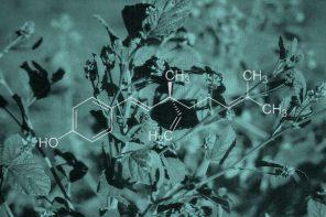 Ingredient Spotlight: Bakuchiol
