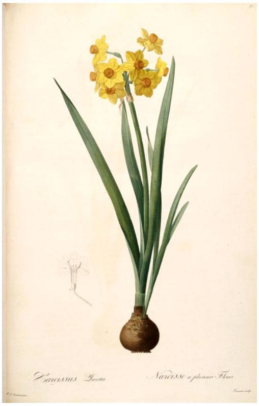 LAB---Narcissus