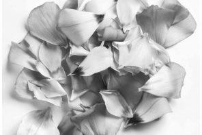 How to Choose a Botanical Perfume