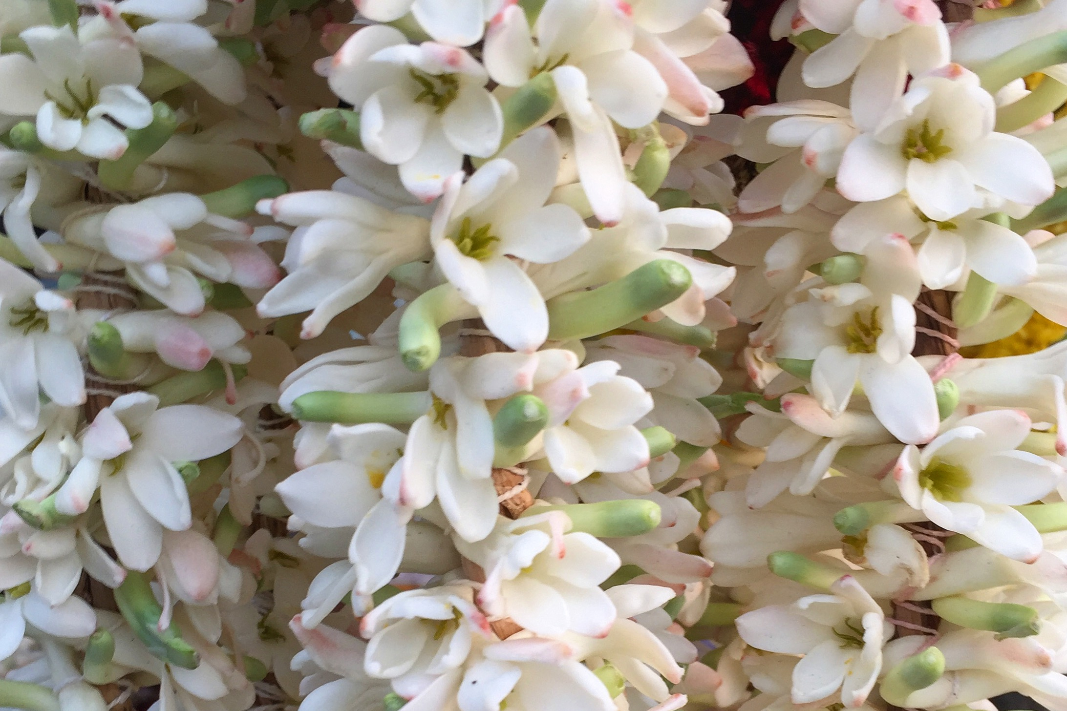 natural body products | tuberose | natural bodycare products