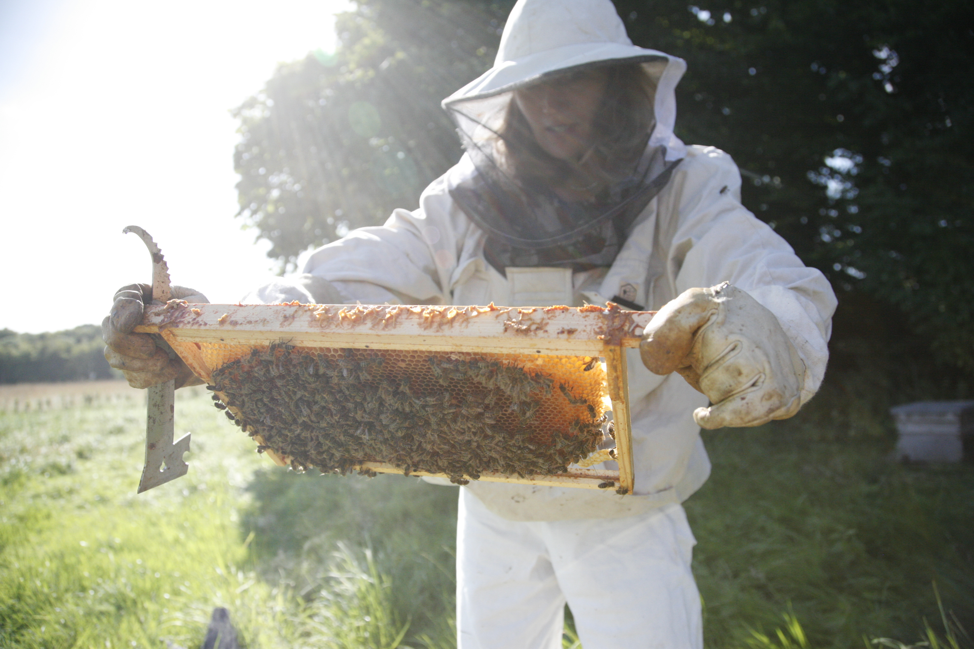beekeeping profile Therapi Honey Skincare honey skin care uk natural skin care uk