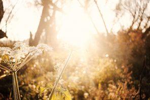 Ingredient Spotlight: Natural Vitamin D for Winter Wellness
