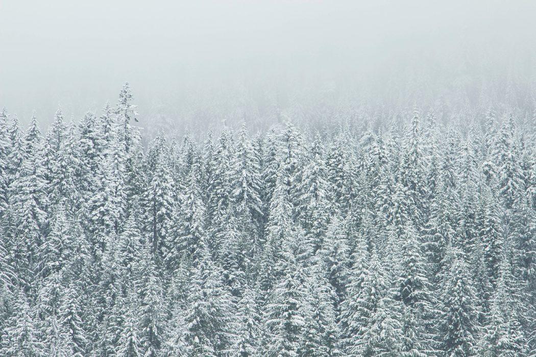 natural beauty _winter attunement