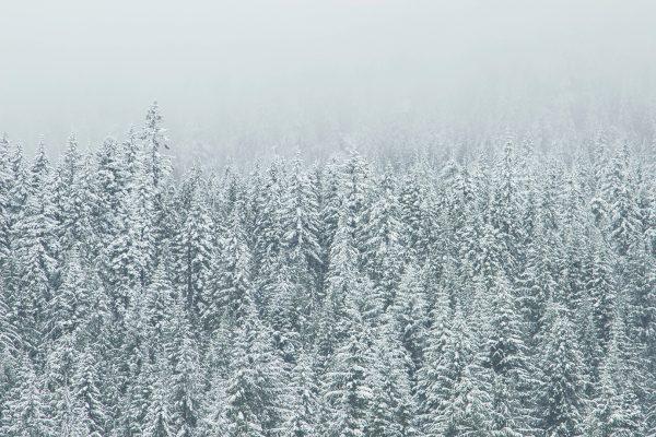 natural beauty winter attunement